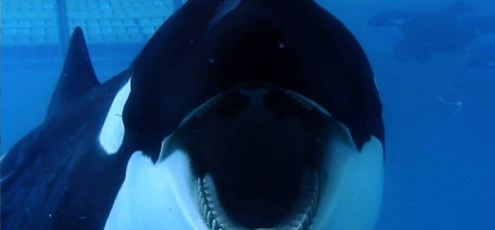 Blackfish dives onto VOD and DVD this August