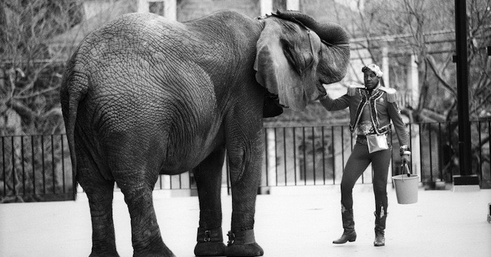 Netflix UK film review: Tyke Elephant Outlaw