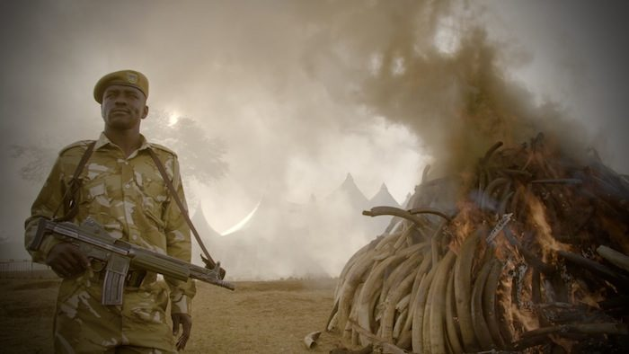 Netflix's The Ivory Game joins the fight to save African elephants