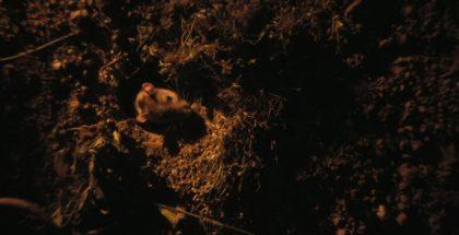 rats-morgan-spurlock