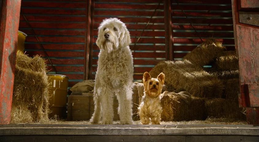 Netflix for Kids: Pup Star