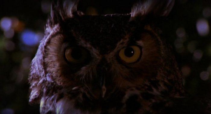 owls twin peaks