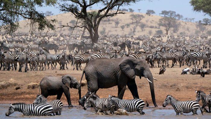 John Boyega to narrate BBC series Serengeti