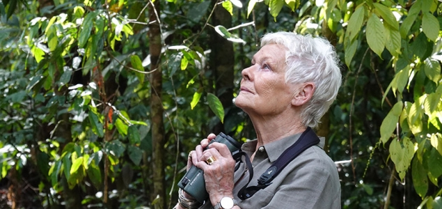 Catch Up TV review: Judi Dench's Wild Borneo Adventure, Shipmates, Drag SOS, Jon Richardson: Ultimate Worrier