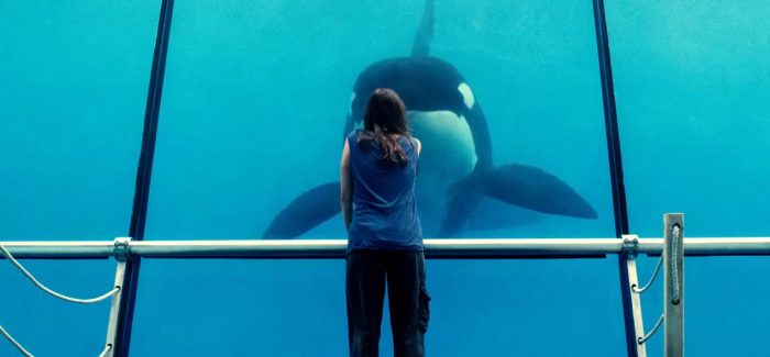VOD film review: Rust and Bone