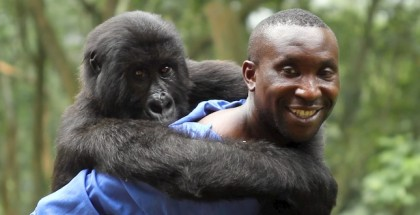 virunga review