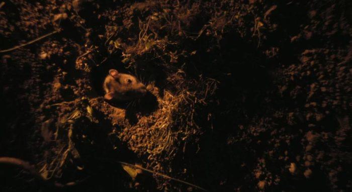 Netflix UK film review: Rats