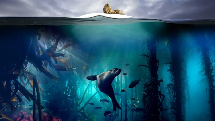 Netflix inks overall deal with Blue Planet II creator