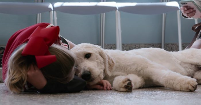 Netflix renews Dogs for Season 2 – and wants to hear from you