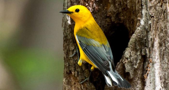 Birders: New documentary flies on to Netflix this September
