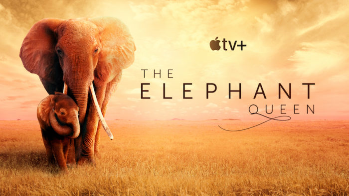 The Elephant Queen stomps into UK cinemas ahead of Apple TV+ launch