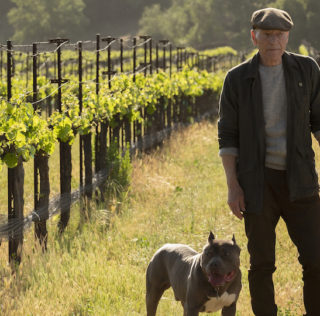 Star Trek: Picard: Boldly going to new, old frontiers