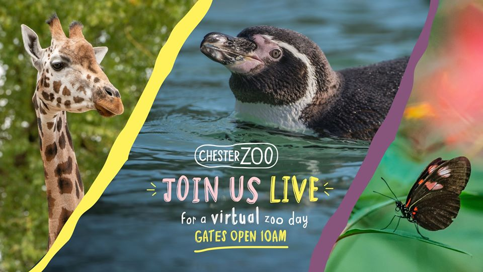 Chester Zoo live-streams virtual day at the zoo