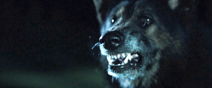 Monster Movie Monday: The Pack (2015)